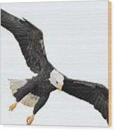 Talons Down Wood Print