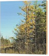 Tamarak Gold Wood Print