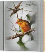 Tanager 4296-ttp Wood Print