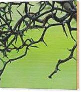 Tangled 1 Wood Print