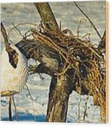 Tangled Driftwood Wood Print