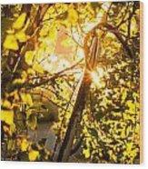 Tangled Flare Wood Print