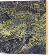 Tangled Neighbors Of The Lone Cypress Wood Print
