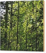 Tannehill Forest Wood Print