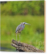 Tantalizing Tricolored Wood Print by Al Powell Photography USA