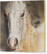 Taos Pony X Wood Print
