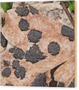 Tar Spot Fungus On Sycamore Wood Print