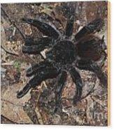 Tarantula Amazon Brazil Wood Print