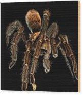 Tarantula Love  Wood Print