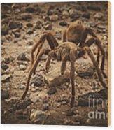 Tarantula Wood Print