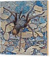 Tarantula Spider In Park Sierra Near Coarsegold-california Wood Print