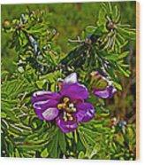 Tarbush In Chihuahuan Desert Of Big Bend National Park-texas   Wood Print