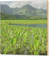 Taro Fields In Hanalei National Wood Print