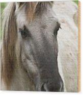 Tarpan Horse Wood Print