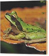 Tarraco Treefrog On Mushroom Costa Rica Wood Print