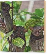 Tarsier Wood Print by Lars Ruecker