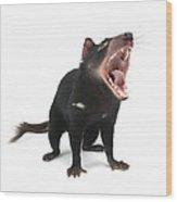 Tasmanian Devil Wood Print by Science Photo Library