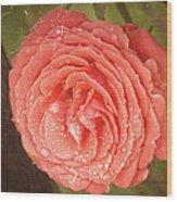 Tattered Rose Wood Print