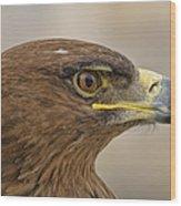 Tawny Eagle 3 Wood Print