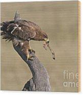 Tawny Eagle With Prey Wood Print