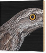 Tawny Frogmouth Wood Print