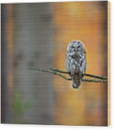 Tawny Owl Wood Print