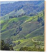 Tea Plantation In The Cameron Highlands Malaysia Wood Print