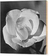 Tea Rose 01 - Infrared Wood Print