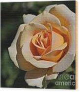 Tea Rose Wood Print
