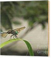Teal Dragonfly Wood Print