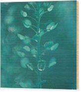 Teardrop In Turquoise Wood Print by Irina Wardas