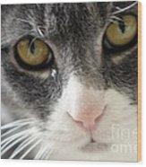 Tears Of A Cat Wood Print