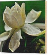 Tears Of A Flower Wood Print