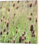 Teasel Meadow Wood Print