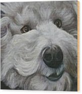 Teddy The Bichon Wood Print