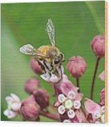 Teetering On Milkweed Wood Print