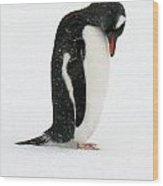 Telephone Bay- Antarctica Wood Print