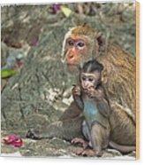 Temple Monkeys Wood Print