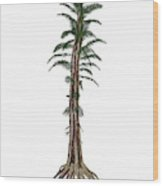 Tempskya Prehistoric Tree-like Fern Wood Print
