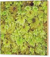 Tender Fresh Green Moss Background Texture Pattern Wood Print