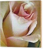 Tender Rose Bud Wood Print
