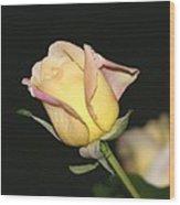 Tender Rose Wood Print