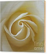 Tenderness White Rose Wood Print