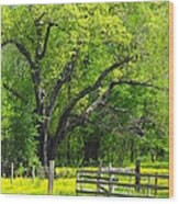 Tennessee Spring Wood Print
