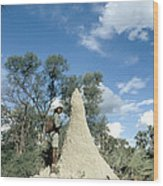 Termite Mound Wood Print by Mark Newman