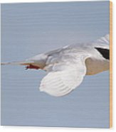 Tern Bird Wood Print by Diane Rada