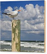 Tern On A Piling Wood Print