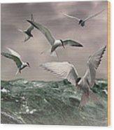 Terns Feasting At Sea Wood Print