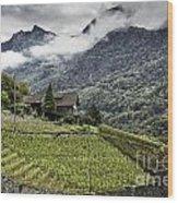 Terraced Vineyard Wood Print
