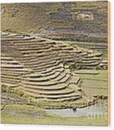 Terraces And Paddy Fields Wood Print